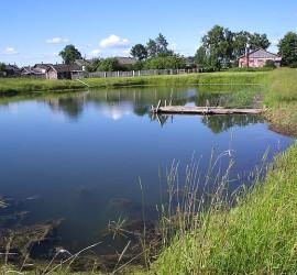 A pond in Yaroslavl Oblast, near Ignatovo village. Photo by User:Monedula